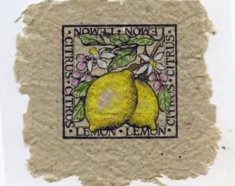 Lemons in Tan