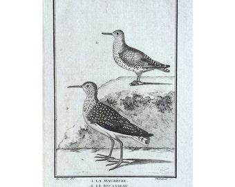 1775 ANTIQUE BIRD ENGRAVING - buffon bird rare original antique print ornithology engraving - wading and shore birds - red knot & sanderling