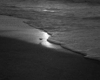 Sandpiper at the Gates of Dawn