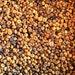 1 Pound Yellow and Brown Putka Pods, unscented, Potpourri, mini pumpkins, bowl filler, dried botanical, fall decor, Bulk Putka Pods
