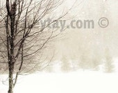 Winter Nature Photography, White Brown Wall Art- Landscape Snow- Rustic Decor- Tree in Blizzard