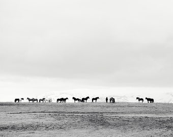 Horse Photography in Black and White, Photography from Iceland