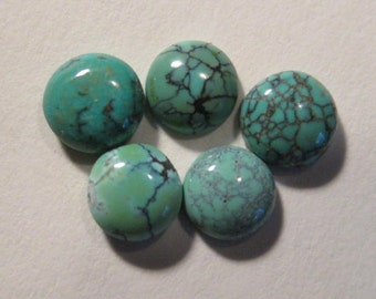 Natural Nevada Turquoise cabs  ....  5 pieces ........ approx 6 mm   ..... B2936