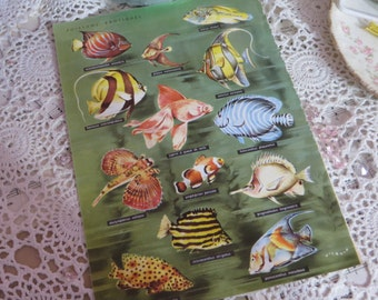 Reference-Audubon-Book Plates-FISH
