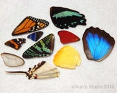 Real Butterfly Wings - Natural authentic butterfly and moth wings - set1