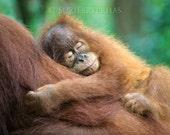 Animal Nursery Art, SLEEP...