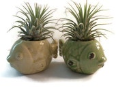 2 little shabby fish planters with air plants. Great gift for plant lover.
