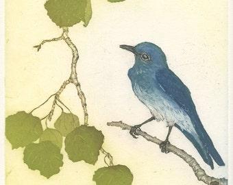 Mountain Bluebird in Aspen Tree, Original Etching