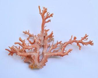 Angel Skin CORAL BRANCH 57.7 gr. 6.5x 4.75 inches Hawaii Early 20th CENTURY
