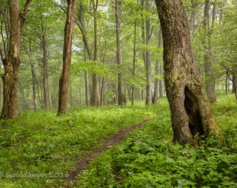 West Virginia Woodland -  A Path Taken