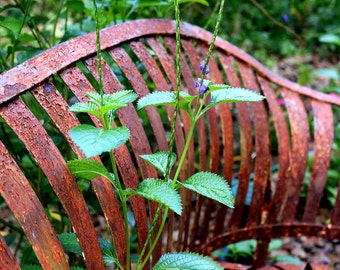 Rusty Glider Garden Bench with Porter weed - Made to order - 5x7 Photographic Art Print