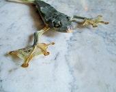 Tropical Tree Frog Specimen Male - SHIP FREE