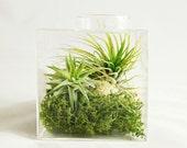 Moss Air Plant Cube Aerium // Air Plant Terrarium