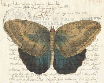 Brown & Indigo Butterfly - X489 - 11x17 Artist Print - Scrapbooking - Decoupage - Poster - Butterfly - Insect