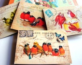 Birds Note Card Set A - Songbirds Little Birds On Vintage Postcards On A Branch Playing A Drum Seashell Victorian Red - 4 Sm Greeting Cards