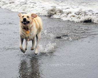 LABRADOR Greeting Card Dog Photography Yellow Labrador Runs on Beach Elated in the Surf