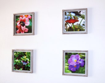 Framed Set of 4 Macro Photography Nature Prints 10x10