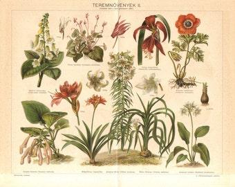 1897 Tree Gloxinia, Cyclamen, Aztec Lily, Poppy Anemone, Mountain Lily, Crinum Lily, Amazon Lily Original Antique Chromolithograph