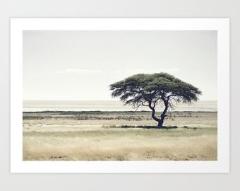 African Tree Photography Print