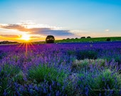 Hitchin, England, Lavender Fields, Fine Art Photography, Landscape Photography, England Photography, Digital Download, Print Your Own