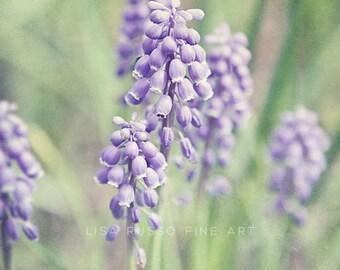 purple hyacinth print or canvas art purple flower picture vertical flower print purple