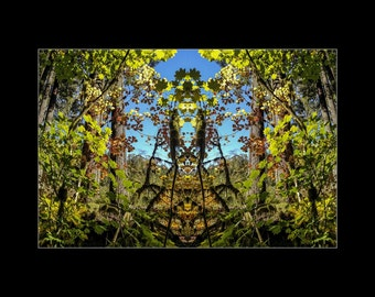 Mirror 1707 16x12_brilliant fall leaves_signed mirrored abstract photography_autumn forest_ Loree Harrell The Mirror Project_ready to ship