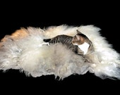 Cat Bed - Felted Wool Fleece Rug - Navajo Churro White and Gray - Supporting US Small Farms - Not a Sheepskin - Better