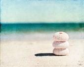 "Sea Urchin Shell Photography, Seashells on Beach Photo, Teal Turquoise Aqua Pink Decor, Coastal Shells Wall Art, Seashore Picture, ""Balance"""