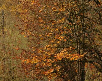 Autumn leaf Photo, In a world of falling leaves, home decor, wall decor, nature decor