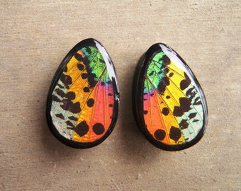 "Real Sunset Wing Teardrop Plugs 1/2""-1""- Sunset Moth Plugs (choose your own size)"