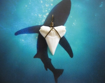 Shark Tooth Necklace Pendant, Modern Day White Shark tooth, Bronze wire wrap