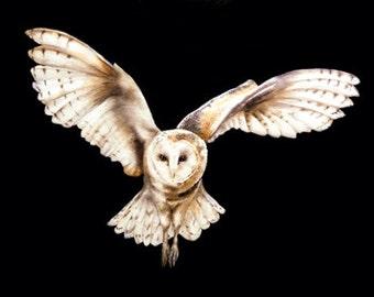 Barn Owl on Black - fine art print, owl painting, birdpainting, owl watercolour, owl print, owls