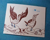 letterpress printed card: blue-footed booby