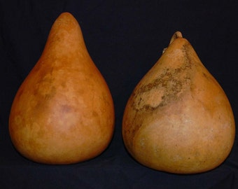 Set of Two Dried Kettle Gourds Craft Ready