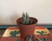 Cactus ceramic catch-all tray