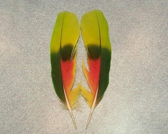 "Matched Pair Amazon Parrot 5"" Tail Feathers AM6"
