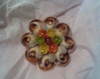 Vintage shell brooch (c.1920-1950)