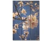 16x24 Cherry Blossom on Cedar, Outdoor Safe Wall Decor, Great Kitchen Art (CB1624)