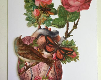 Anatomical heart collage #2