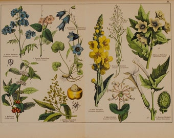 Vintage Botanical Print [3]