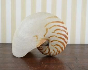Vintage Nautilus Shell