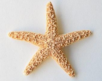 1 Large Starfish Mermaid Hair Clip/Barrette. Nautical Bridal Accessories, Ariel Mermaid Hair Clip, Starfish Hair Accessories