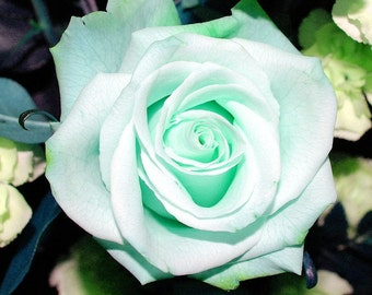 Mint green roses seeds,mint roses seeds, 447,green rose, Colorful rose,flower seeds, roses from seeds, seeds for roses, gardening
