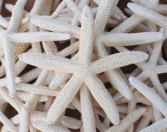 "1 LARGE 4 - 6"" Pencil Starfish - Natural Beach Wedding Decoration"