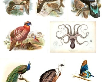 Vintage Natural History Magnets - Illustrations from circa 1820