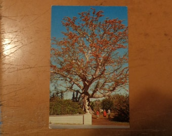 Vintage Original The Kapok Tree Inn North Haines Road Clearwater Florida Postcard Free Shipping