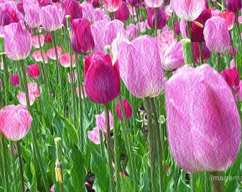 Pink Spring Tulips in the Garden