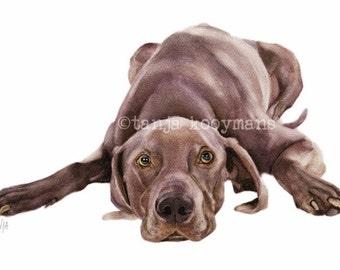 Weimaraner, Dog Art Print, Watercolor, dog portrait petportrait size 8x12 inch