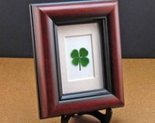 Mahogany Frame with a Real Genuine Four Leaf Clover - MH-4F