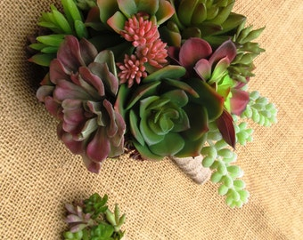 Succulents that last forever